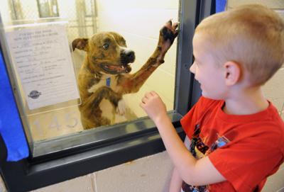 Gwinnett animal shelter file photo