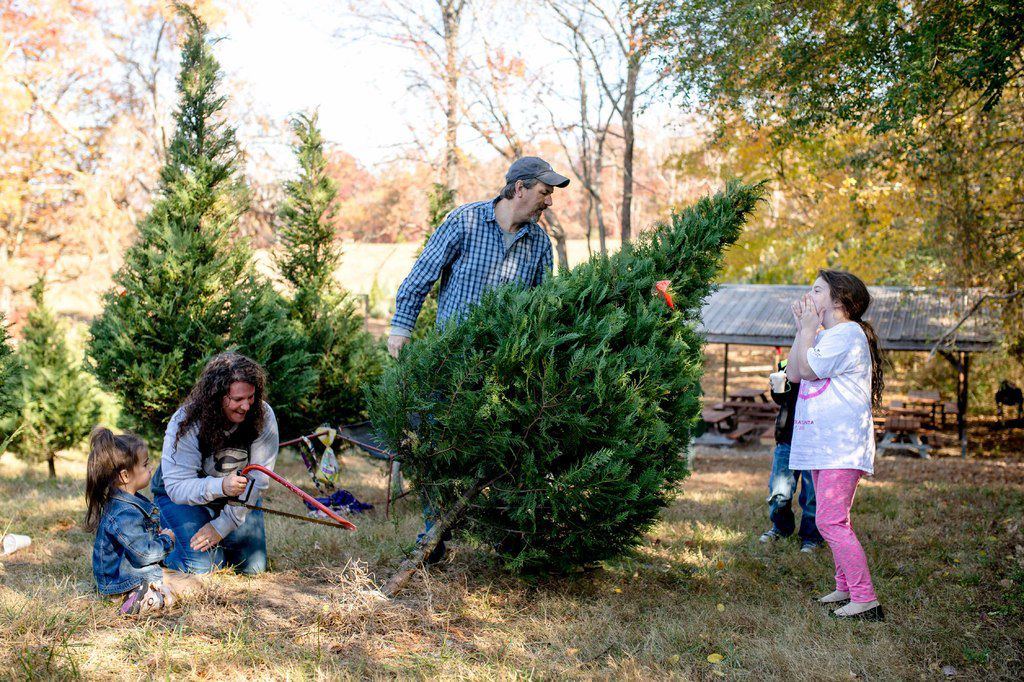 Local tree farm a Christmas tradition for many families ...