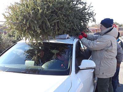 tree_recycling.jpeg (copy)