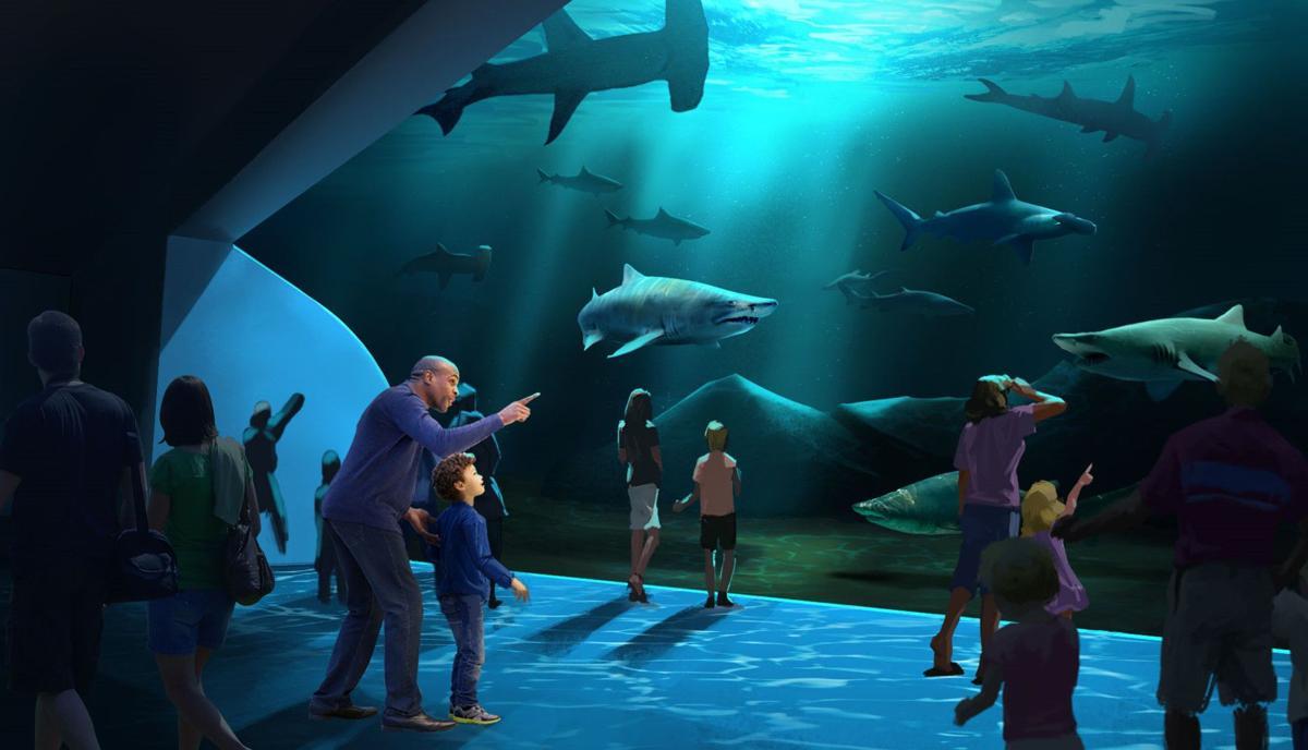 Georgia Aquarium reveals plans for new expansion to open ...