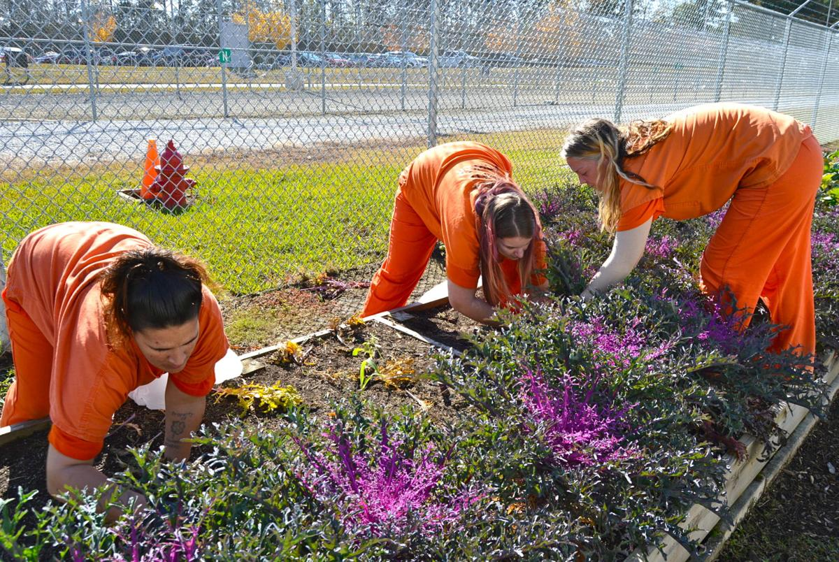 Gwinnett County Jail garden program gives inmates new outlook, opportunities