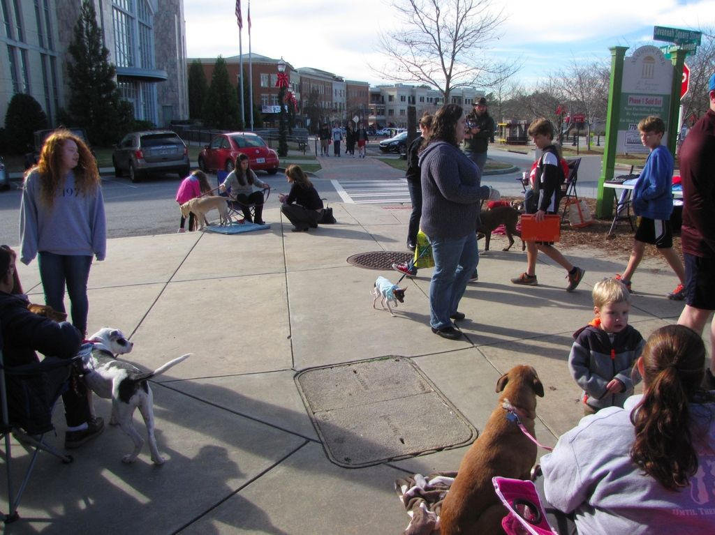 Suwanee pet adoption event sees steady turnout