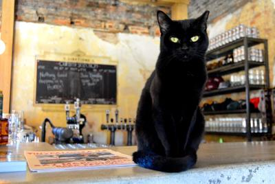 Slow Pour Brewing Company taking advantage of Planned PEThood Barn Cat Program
