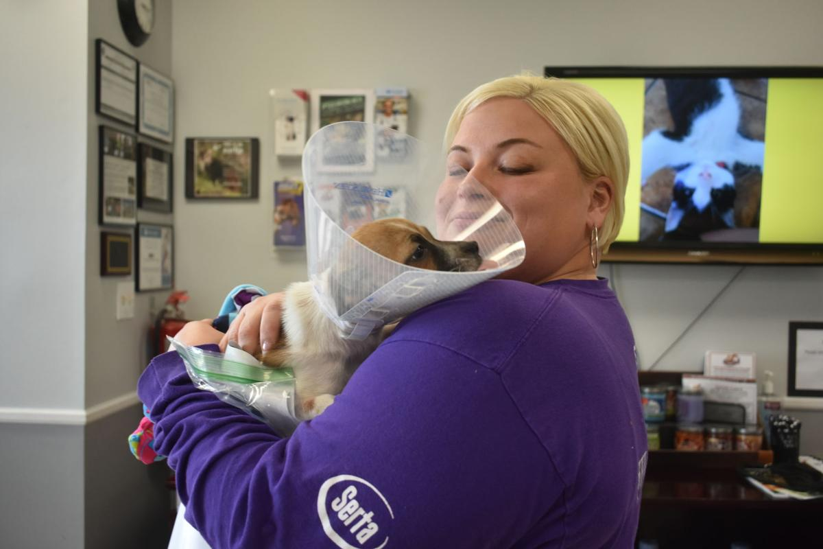 Planned Pethood works to alleviate pet overpopulation in Lawrenceville with free surgeries on Spay Day