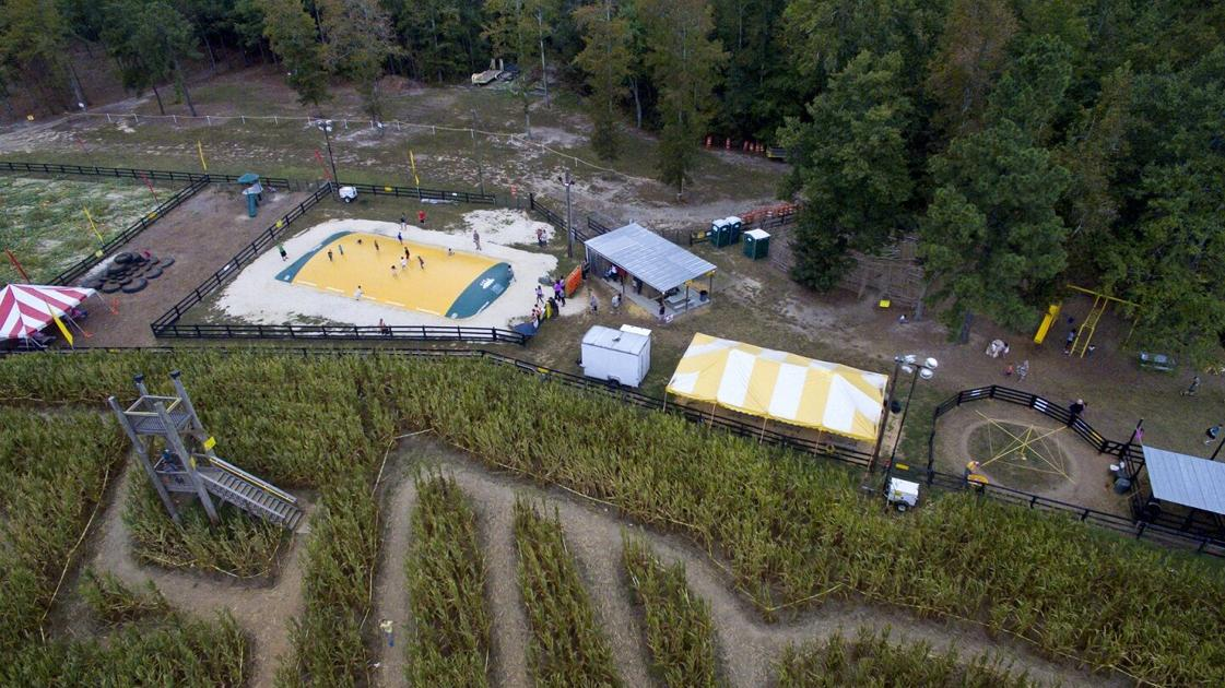 Corn maze back for 12th year with social distancing