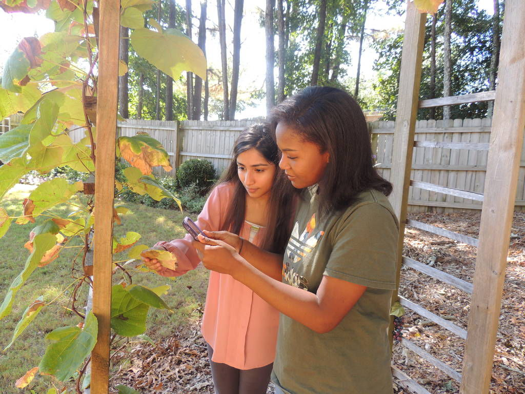 Peachtree Ridge students design app to diagnose plant diseases
