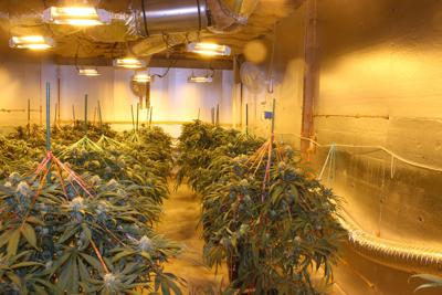Marijuana grow house bust nets $35 million in drugs, 16 arrests