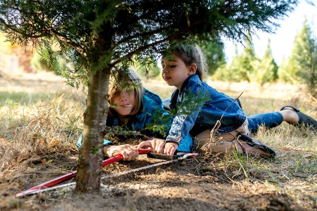 Local tree farm a Christmas tradition for many families