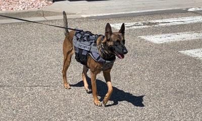 Dog abandoned in Castle Rock becomes K-9 for Denver Sheriff Department