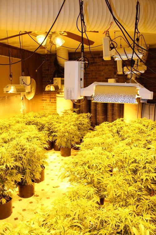 Fine Marijuana Grow House Bust Nets 35 Million In Drugs 16 Download Free Architecture Designs Scobabritishbridgeorg