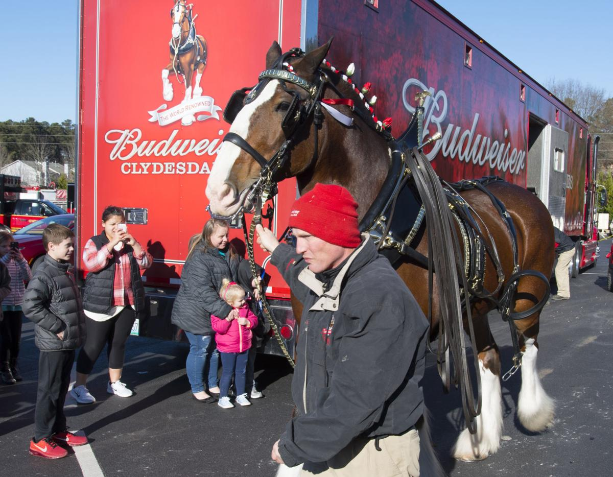 Budweiser Clydesdales to appear in Gwinnett this week