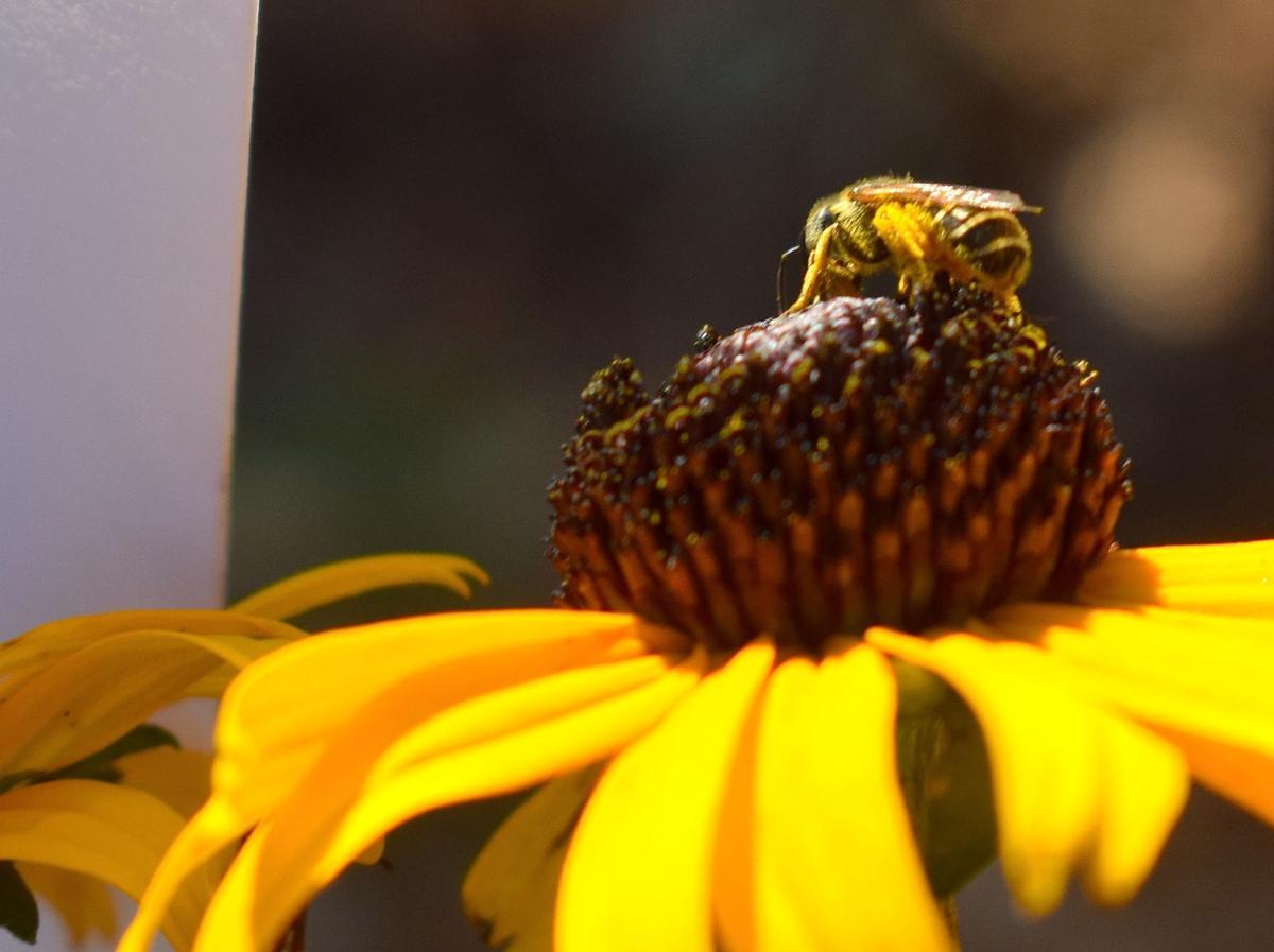 Bee Count 1.jpeg