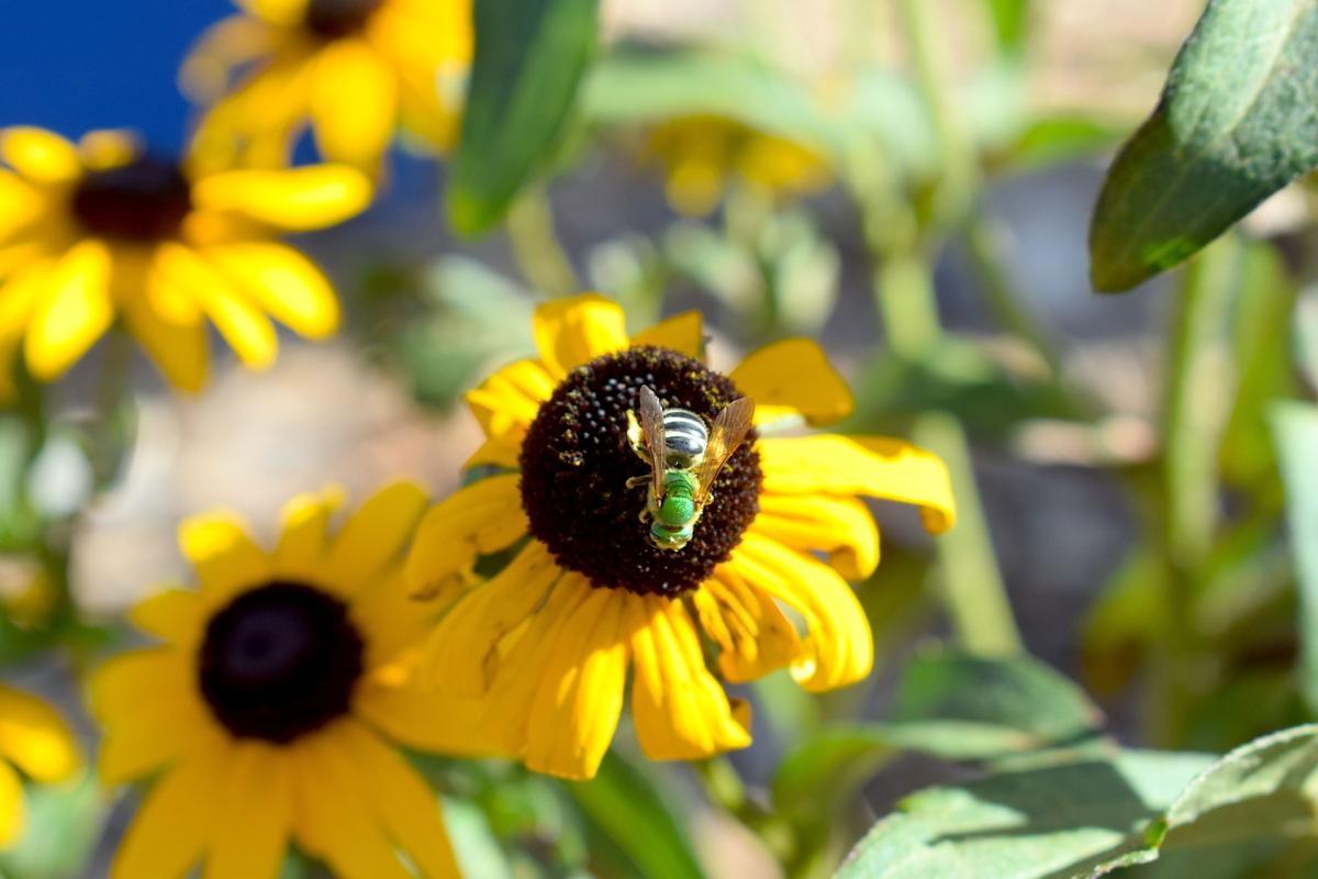 Bee Count 2.jpeg