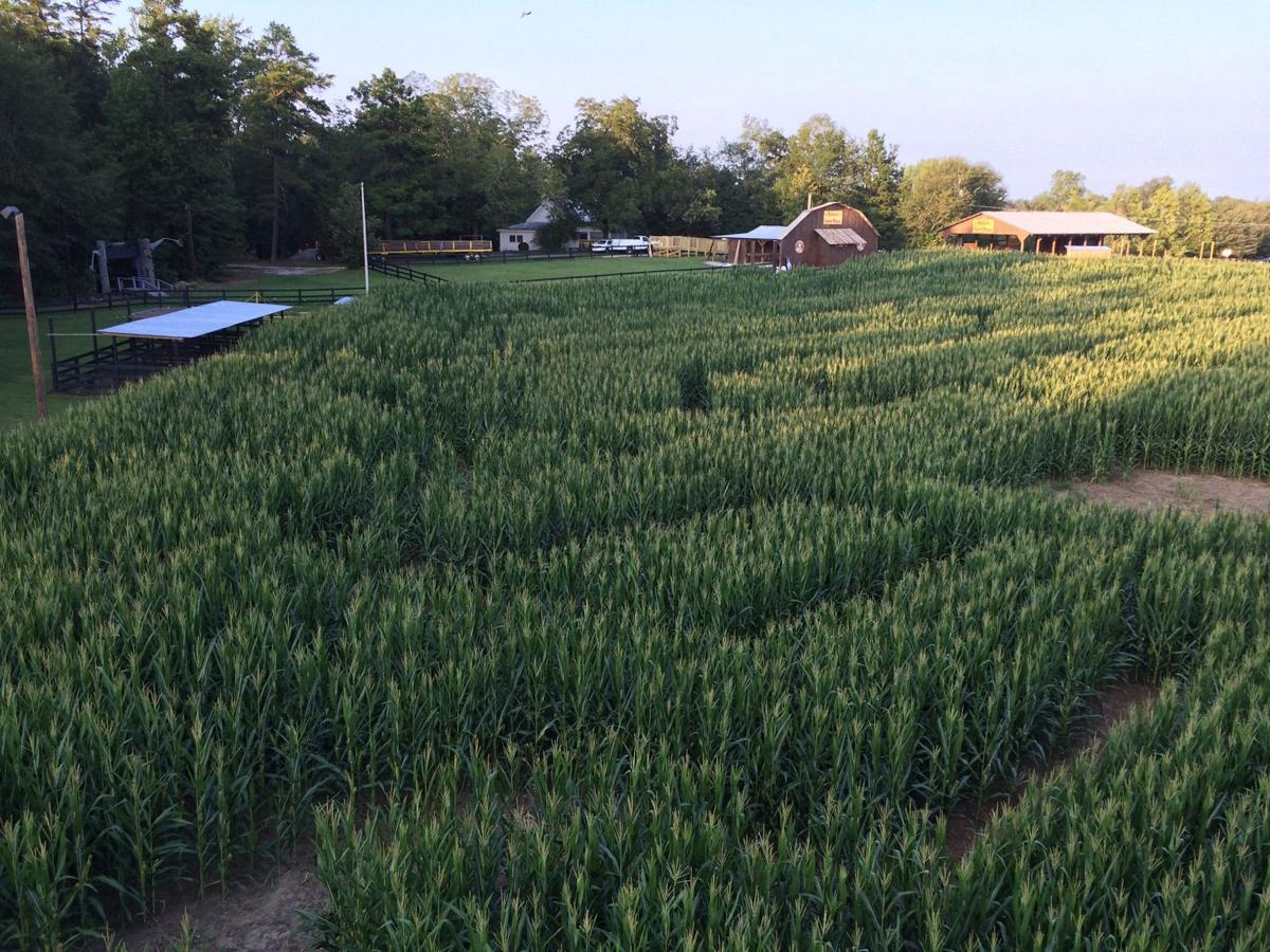 Download Chappelle Show Corn Field