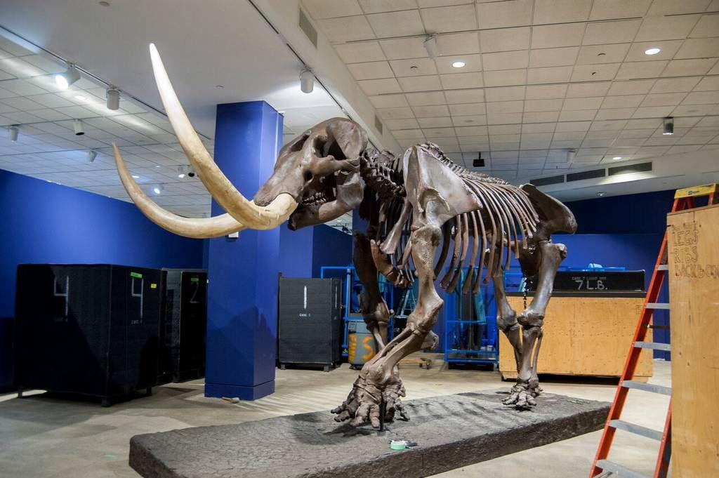 Gwinnett Museum Of Natural History