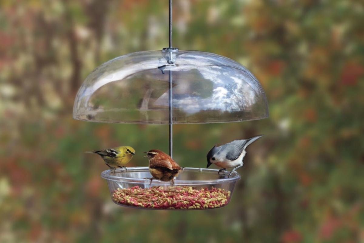 Feeding birds can be enjoyable for any age group and provide stress relief for all who partake