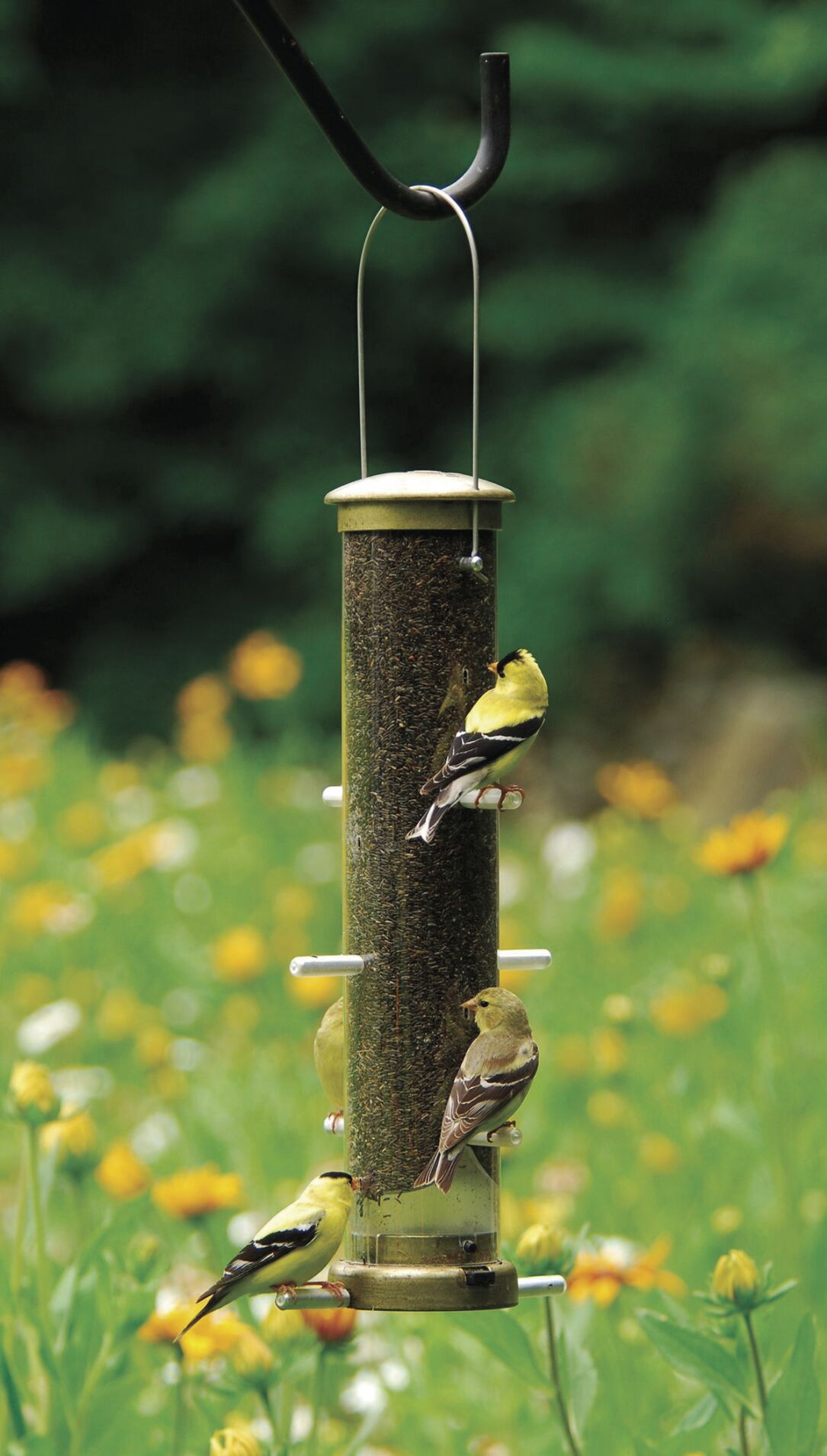 Traditional tube feeders are all-purpose options for bird feeding, especially for small birds that cling.