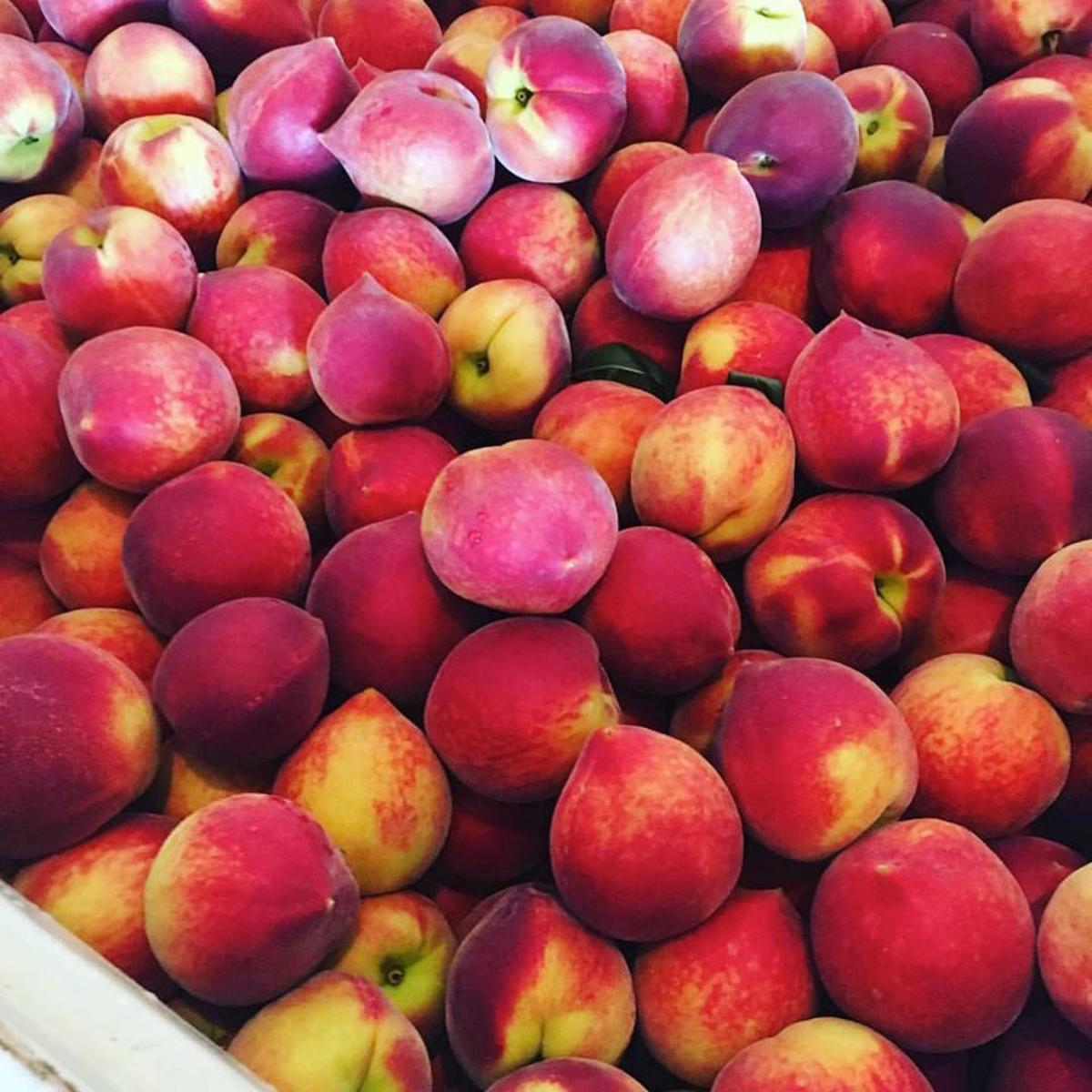 peaches-at-pearson-farm-1495546676.jpg