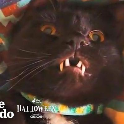VIDEO: Cat With Fangs Might Actually Be A Vampire | The Dodo