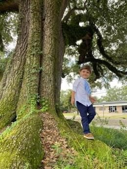 Registry to include Live Oak