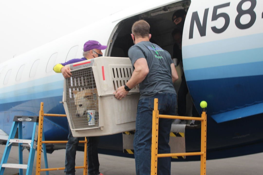 Ninety dogs fly to new homes