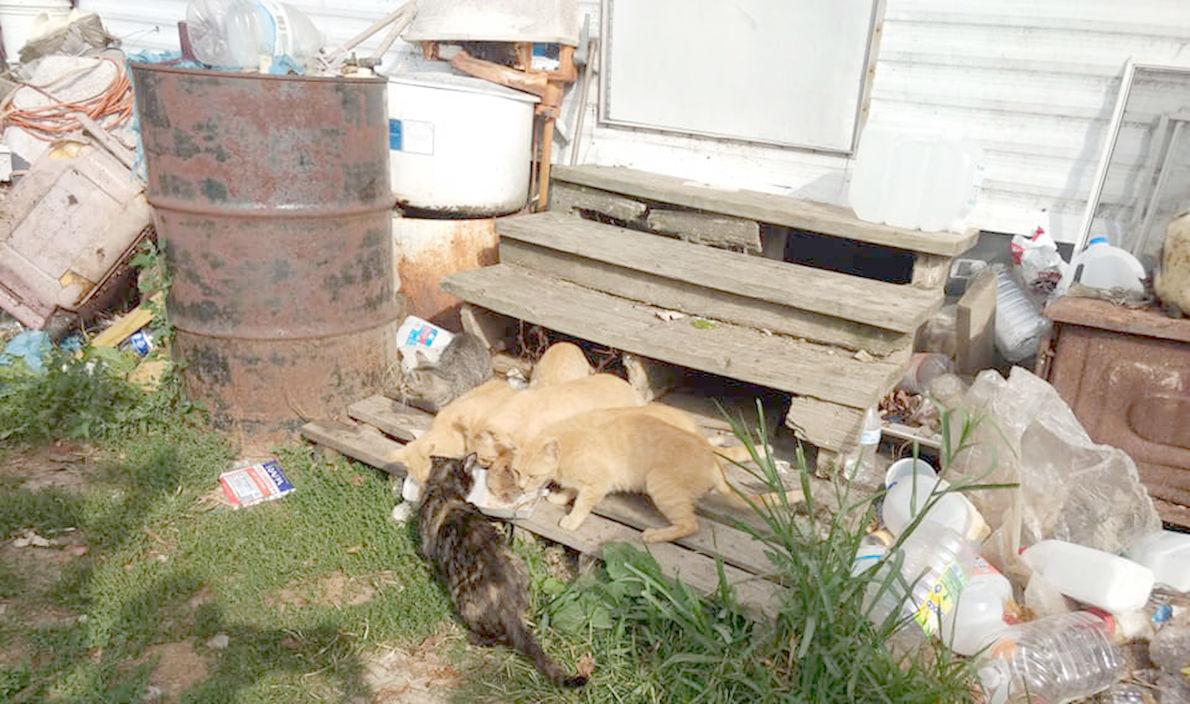 0904 cats 1.jpg
