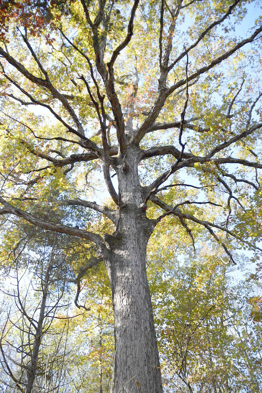 0526 farm oaks 1.jpeg