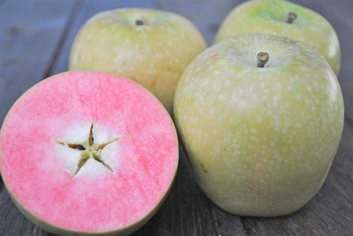 0609 lost apple 2.jpeg