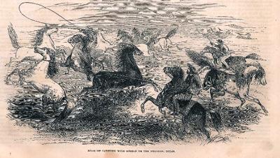 Texas wild horses