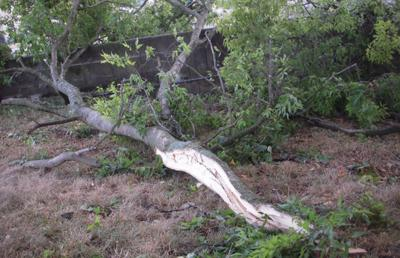 tree-limb-down.jpg
