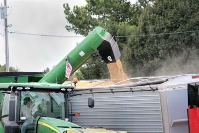 P-1 Photo -- Soybean harvest (1).jpg