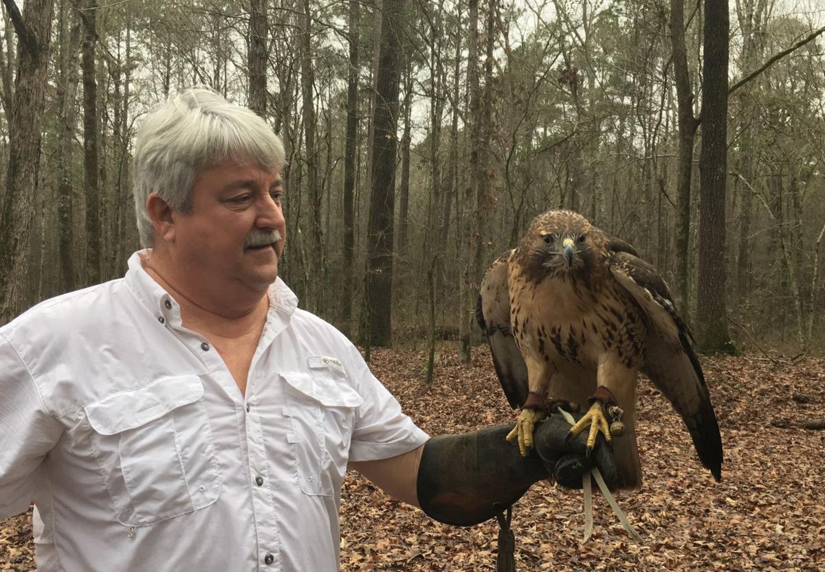 Monroe Falconer First To Trap Peregrine In Louisiana Local State Headlines Hannapub Com