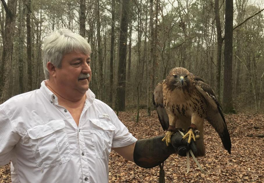 Monroe Falconer First To Trap Peregrine In Louisiana Local State Headlines Hannapub Com