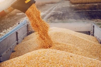 cornharvest.jpg