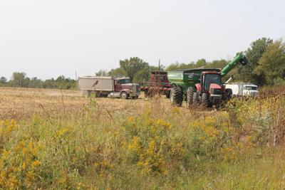 Area harvest showing less than expected corn yield; soybeans still have strong potential