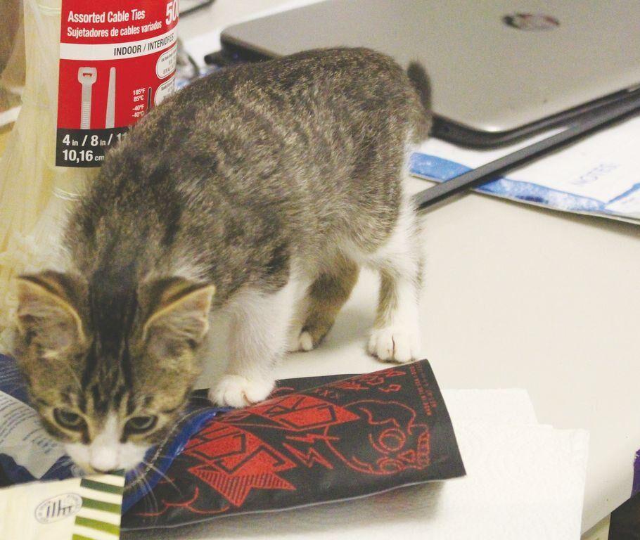 NEMO Humane Society at capacity with cats