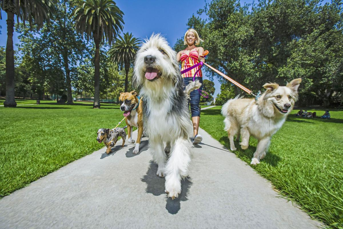 Let's take the pups to a park!   1