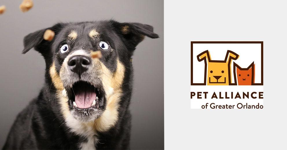 Pet-Photo-Shoot-Fundriaser-Orlando.jpg