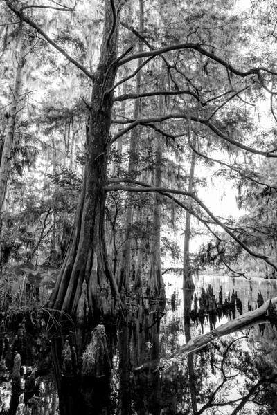 Conservation of The Everglades Headwaters is Priority