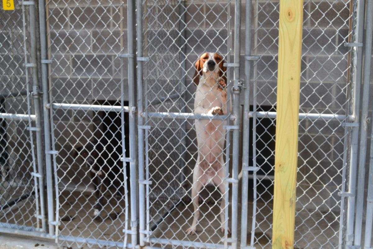 Kentucky River Animal Shelter struggling with high