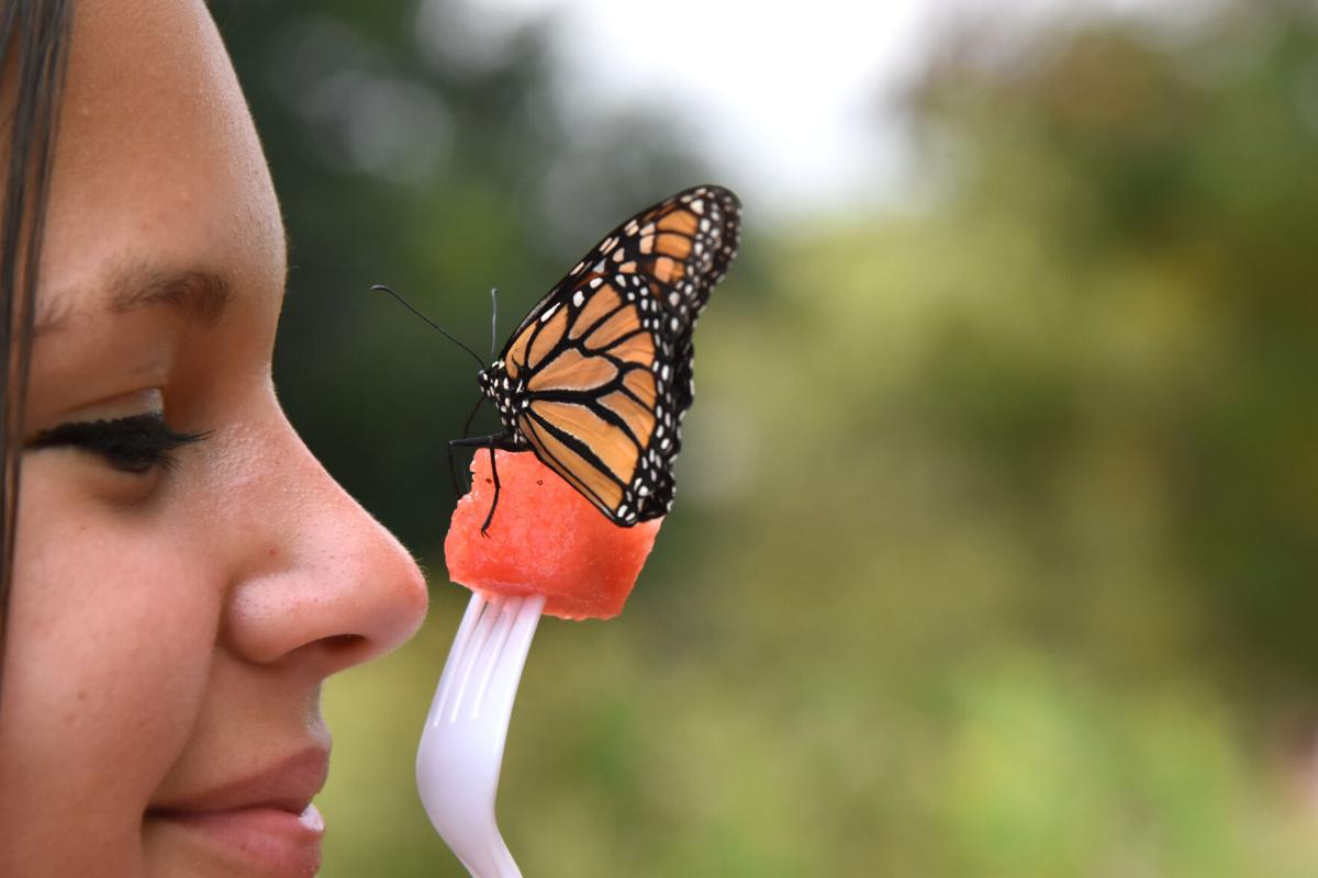 Monarchs (1).jpg