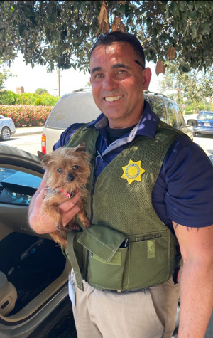 Stolen Yorkie gets safe return to local owner