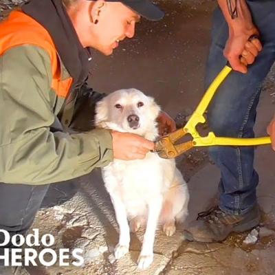 Guy Saves Chained-Up Dogs From Abandoned Building | The Dodo Heroes