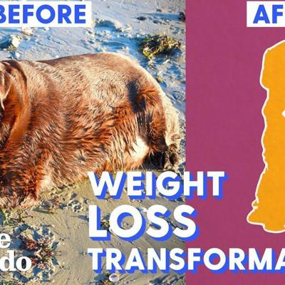 Top 5 Dog Weight Loss Transformations | The Dodo