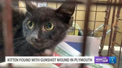 Kitten found with gunshot wound