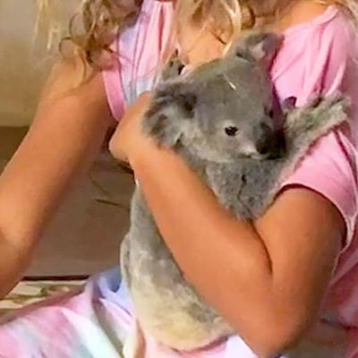 Clingy Baby Koala Who Loved Bedtime Stories Gets Rescued…Twice | The Dodo