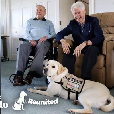 Former President's Service Dog Is SO Excited To See His Mom | The Dodo Reunited