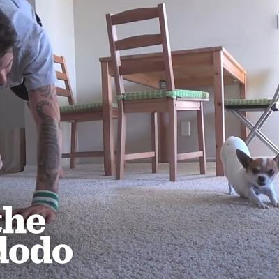 Dog Copies Every Single Yoga Pose His Dad Does | The Dodo