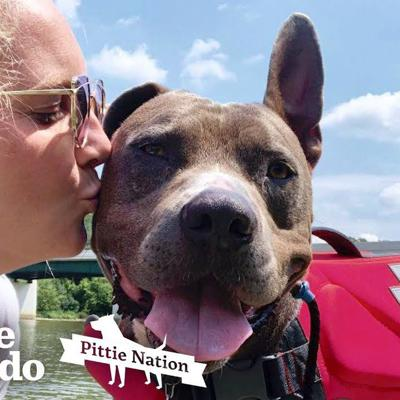 Pit Bull Returned 3 Times Finally Walks Out Of The Shelter One Last Time | The Dodo Pittie Nation