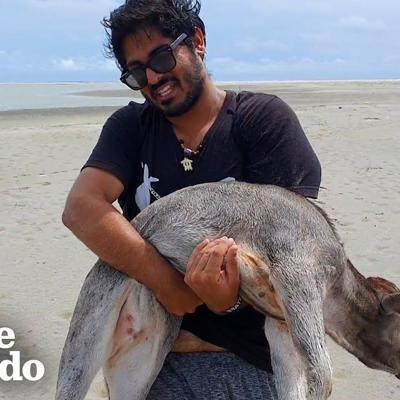 Guys Carry Baby Cow Stranded On Beach Until They Can Find Help | The Dodo
